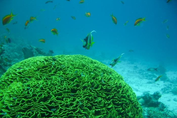Mar Vermelho - Subaquático.jpg