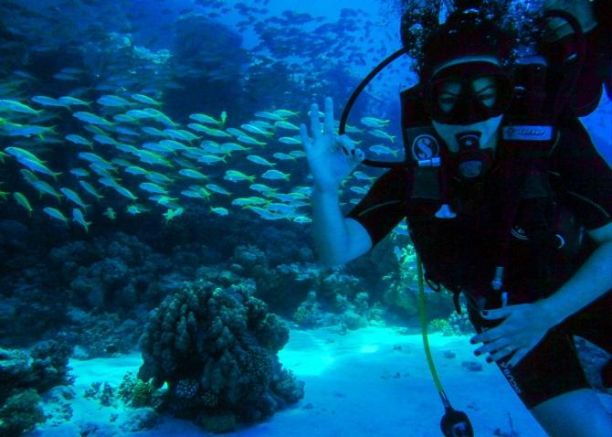 No fundo do Mar Vermelho.jpg