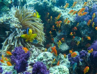 Peixes e Coaris - Mar Vermelho