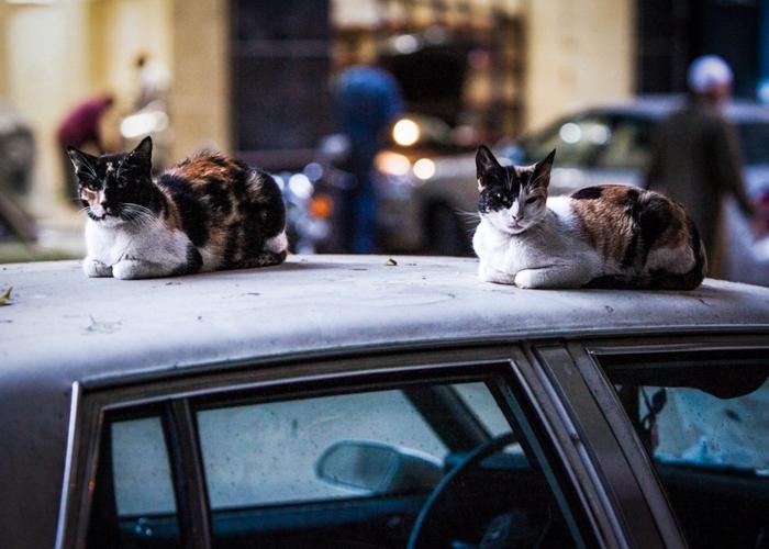 Gatos de Cairo by Aymann Ismail